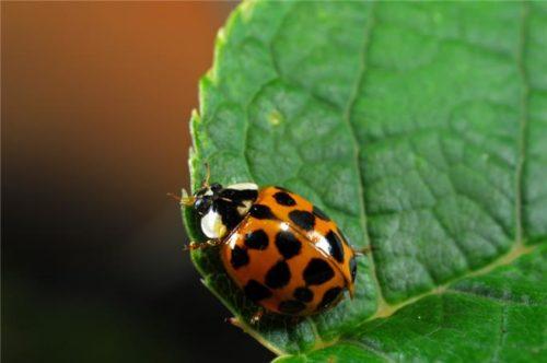 Yaprak Yiyen Böceklerden Kurtulma - Örgü Modelleri - 1