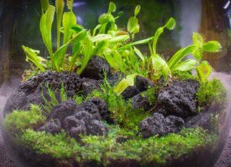 Fanus Süsleme - Hobi Dünyası - cam fanus dekorasyon dekoratif fanus süsleme fanus süsleme fiyatları fanus süsleme teknikleri teraryum