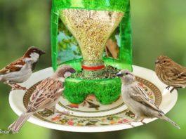 Kuş Yemliği Yapımı Okul Öncesi - Okul Öncesi Etkinlikleri - kuş yemliği el yapımı kuşlar ne yer kuşlara yem yapımı pet şişe kuş yemliği rulodan kuşlara yemlik