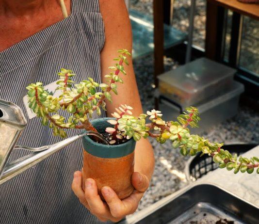 Sulama Hangi Saatte Yapılır - Pratik Bilgiler - ağaçların su ihtiysaçları bahçe hangi saatte sulanır hangi bitki nasıl sulanır sulama zaman saati