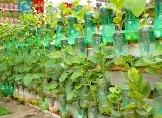 Evde Organik Sebze Yetiştirme - Kendin Yap - balkonda sebze yetiştirme kışın evde sebze yetiştirme saksıda balkon bahçeciliği saksıda sebze yetiştirmenin püf noktaları sebze yetiştirme aşamaları